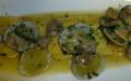 Tortelli di spigola con sughetto di vongole